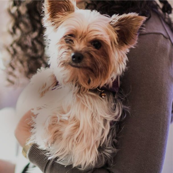 Pet Friendly Hotels in Downtown Chicago