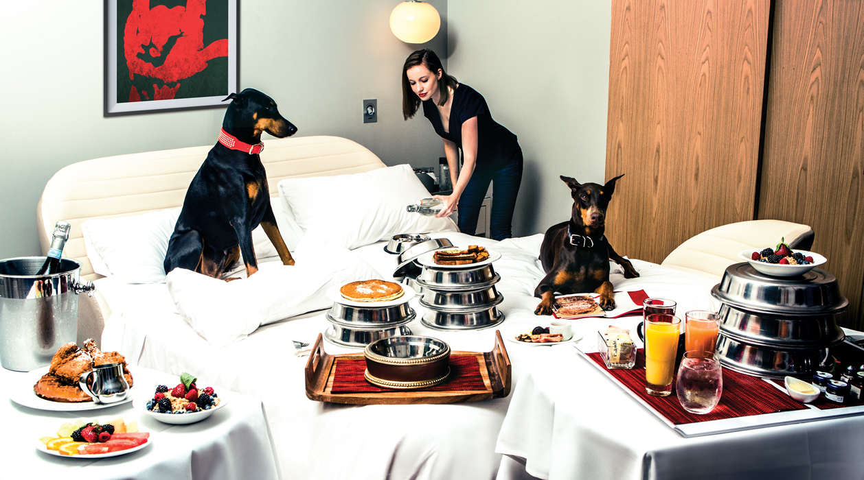 Two dogs laying in bed about to have a feast on room service