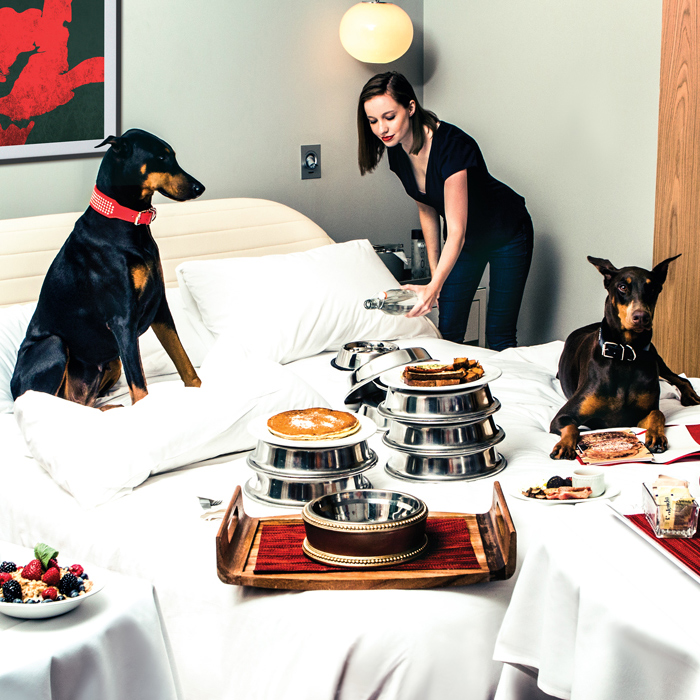 Dogs getting breakfast in bed at Virgin Hotels Chicago
