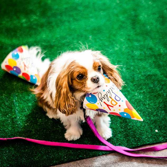 Pet celebrations at Virgin Hotels